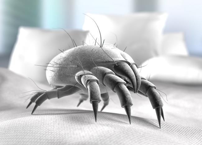 hausstaubmilben und milben kot effektiv bek mpfenvivenso blog. Black Bedroom Furniture Sets. Home Design Ideas